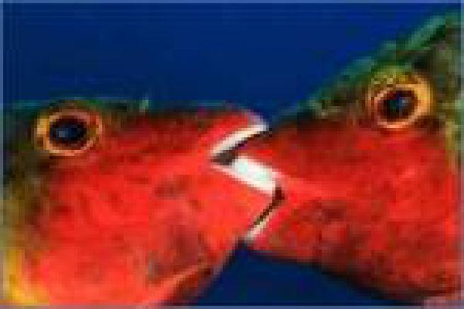 Grand succ�s pour le premier Grand Prix Epson de photo sous-marine