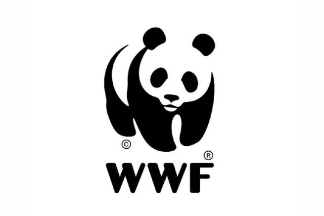 Le WWF belge alerte les consommateurs sur du papier