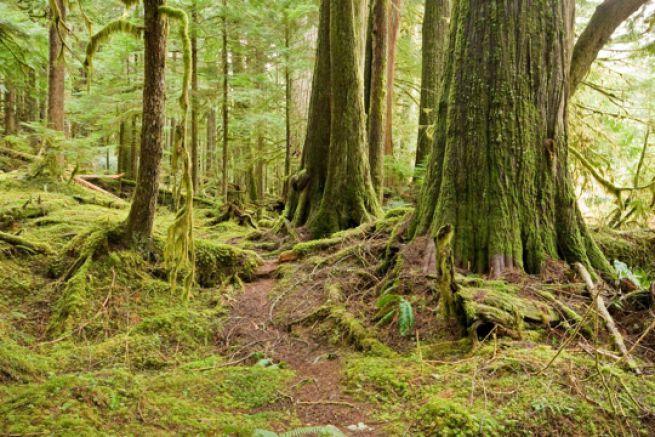 Le groupe papetier Stora Enso accus� d'abattre des arbres vieux de 300 ans