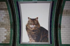 Un collectif d'artistes anglais a remplacé les pubs print du métro par des photos de chat