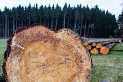 WWF récompense les producteurs de papier éco-responsables.