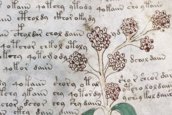 Le Voynich est écrit dans un langage toujours indéchiffré à ce jour.